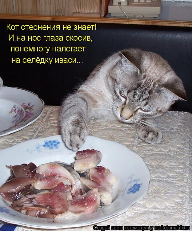 Котоматрица: Кот стеснения не знает! И,на нос глаза скосив, понемногу налегает  на селёдку иваси...