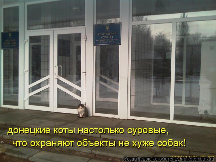 Котоматрица: донецкие коты настолько суровые, что охраняют объекты не хуже собак!