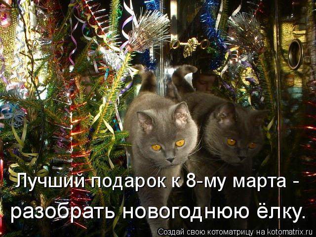 Котоматрица: Лучший подарок к 8-му марта -  разобрать новогоднюю ёлку.