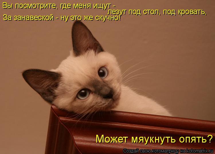 Котоматрица: Вы посмотрите, где меня ищут -  лезут под стол, под кровать, За занавеской - ну это же скучно!  Может мяукнуть опять?