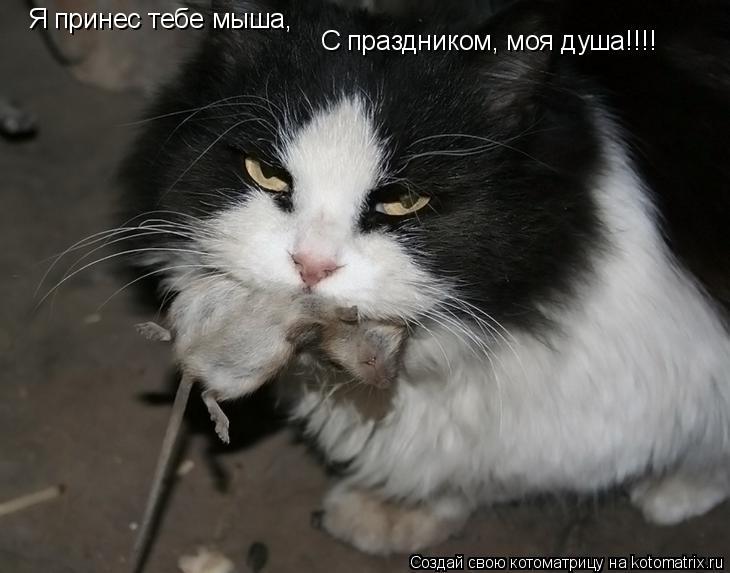 Котоматрица: Я принес тебе мыша, С праздником, моя душа!!!!