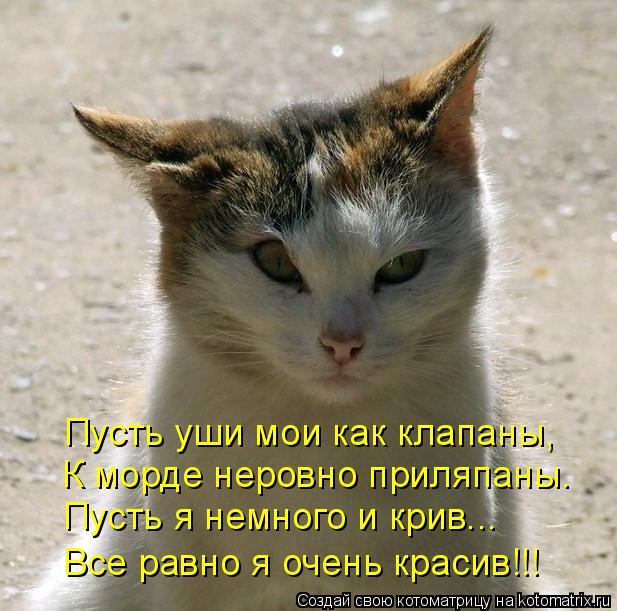 Котоматрица: Пусть уши мои как клапаны, К морде неровно приляпаны. Пусть я немного и крив... Все равно я очень красив!!!