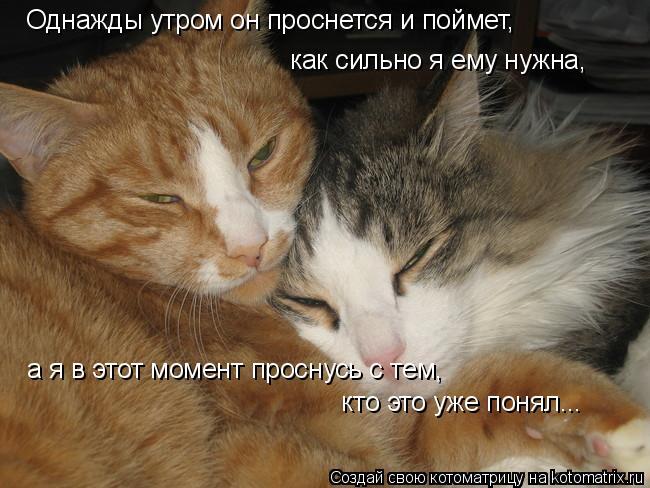 Котоматрица: Однажды утром он проснется и поймет, как сильно я ему нужна,  а я в этот момент проснусь с тем,  кто это уже понял...