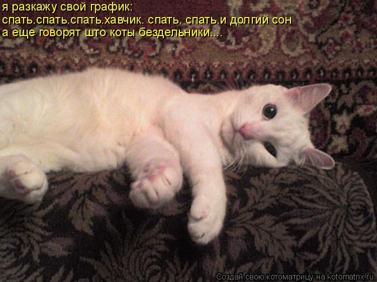 смешная картинка спать сука