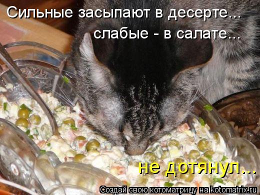 Котоматрица: Сильные засыпают в десерте... слабые - в салате... не дотянул...