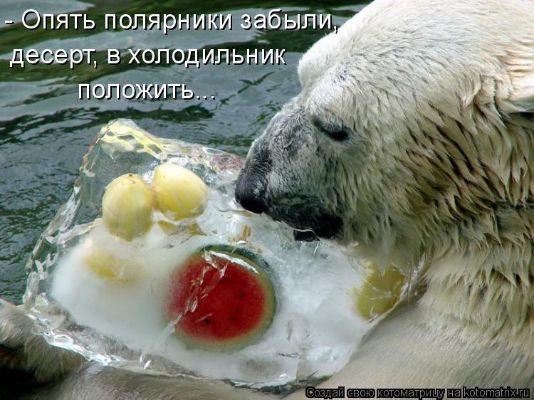 Котоматрица: - Опять полярники забыли, десерт, в холодильник  положить...