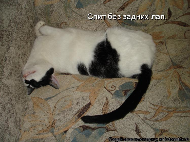 Котоматрица: Спит без задних лап.