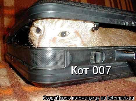 Котоматрица: Кот 007