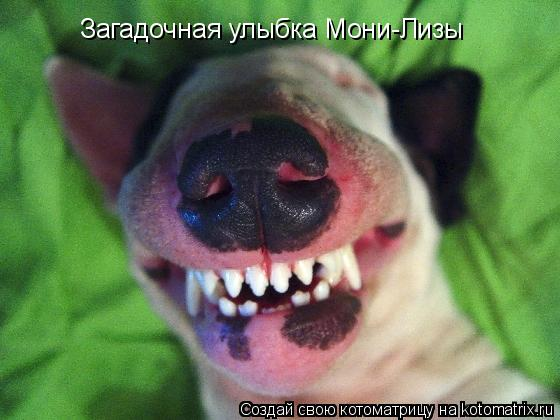 Котоматрица: Загадочная улыбка Мони-Лизы