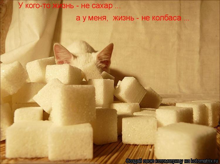 Котоматрица: У кого-то жизнь - не сахар ... а у меня,  жизнь - не колбаса ...
