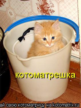 Котоматрица: котоматрешка