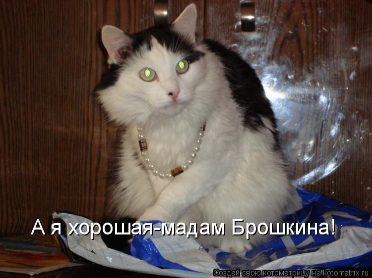Котоматрица: А я хорошая-мадам Брошкина!