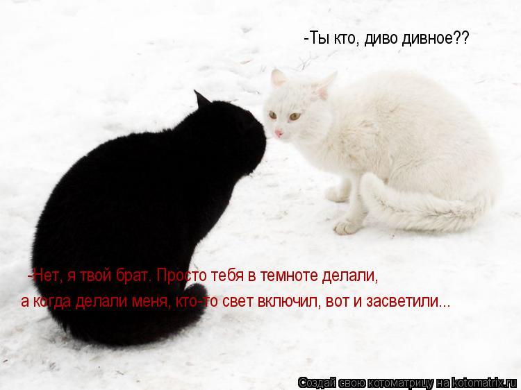 Котоматрица: -Ты кто, диво дивное?? -Нет, я твой брат. Просто тебя в темноте делали, а когда делали меня, кто-то свет включил, вот и засветили...