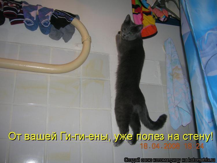 Котоматрица: От вашей Ги-ги-ены, уже полез на стену!