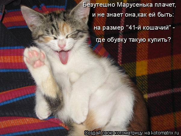 """Котоматрица: Безутешно Марусенька плачет, и не знает она,как ей быть: на размер """"41-й кошачий"""" - где обувку такую купить?"""