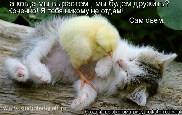 Котоматрица: а когда мы вырастем , мы будем дружить? Конечно! Я тебя никому не отдам! Сам съем...