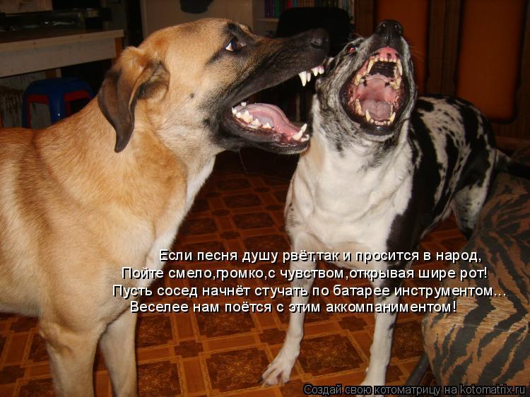 Котоматрица: Если песня душу рвёт,так и просится в народ, Пойте смело,громко,с чувством,открывая шире рот! Пусть сосед начнёт стучать по батарее инструме