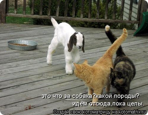 Котоматрица: это что за собака?какой породы? идём отсюда,пока целы.