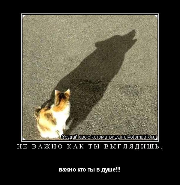 Котоматрица: не важно как ты выглядишь, важно кто ты в душе!!!