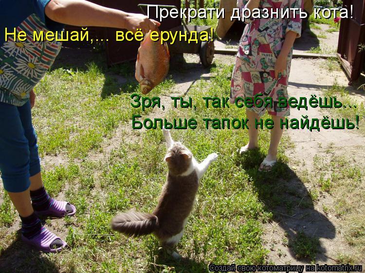 Котоматрица: Прекрати дразнить кота! Зря, ты, так себя ведёшь... Больше тапок не найдёшь! Не мешай,... всё ерунда!