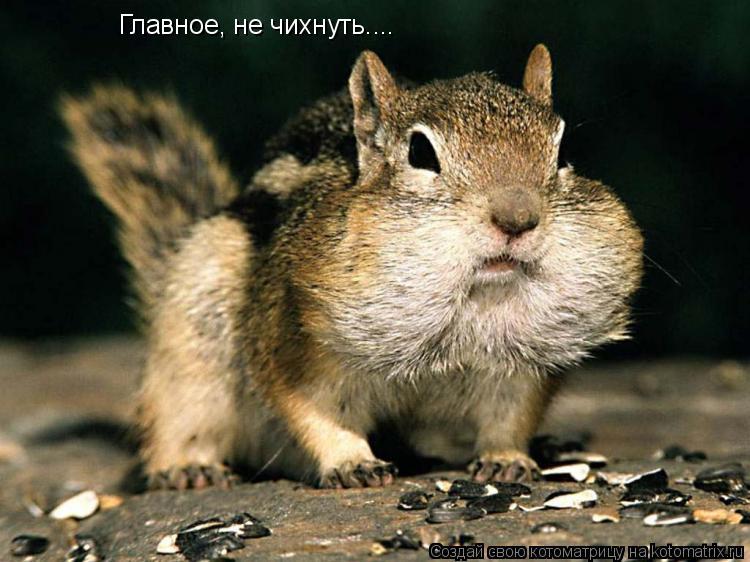 Котоматрица: Главное, не чихнуть....