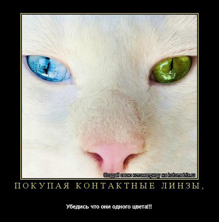 Котоматрица: Покупая контактные линзы, Убедись что они одного цвета!!!