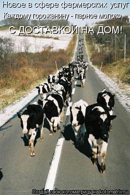 Котоматрица: Новое в сфере фермерских услуг Каждому горожанину - парное молоко, С ДОСТАВКОЙ НА ДОМ!