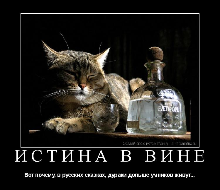 Котоматрица: Истина в вине Вот почему, в русских сказках, дураки дольше умников живут...