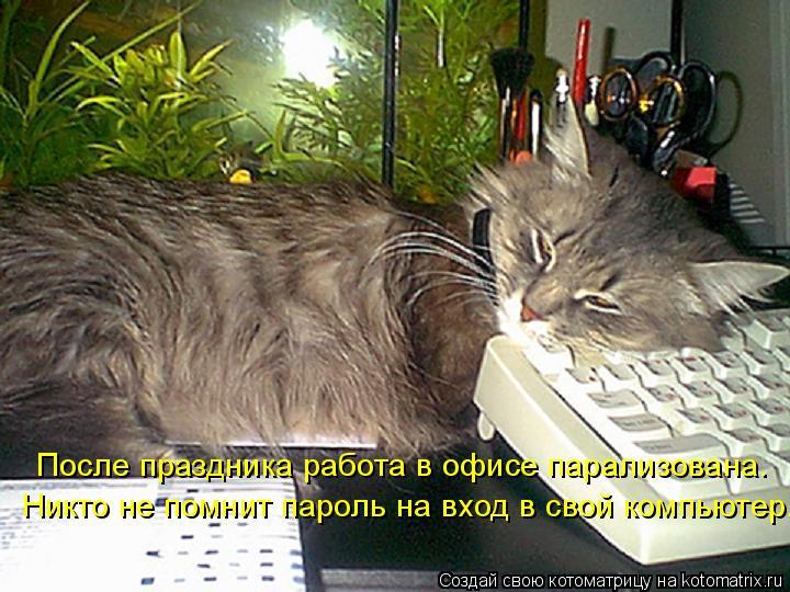 Котоматрица: После праздника работа в офисе парализована. Никто не помнит пароль на вход в свой компьютер.