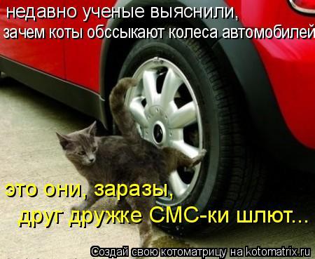 Котоматрица: недавно ученые выяснили, зачем коты обссыкают колеса автомобилей  это они, заразы, друг дружке СМС-ки шлют...