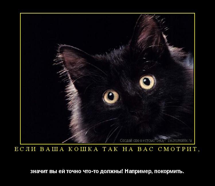 Котоматрица: Если ваша кошка так на вас смотрит, значит вы ей точно что-то должны! Например, покормить.