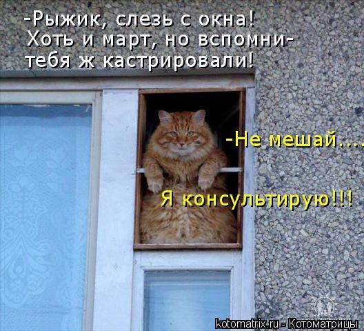 Котоматрица: -Рыжик, слезь с окна! Хоть и март, но вспомни- тебя ж кастрировали! -Не мешай.... Я консультирую!!!