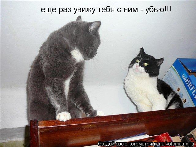 Котоматрица: ещё раз увижу тебя с ним - убью!!!