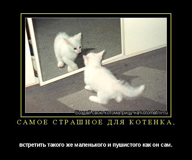Котоматрица: Самое страшное для котёнка, встретить такого же маленького и пушистого как он сам.