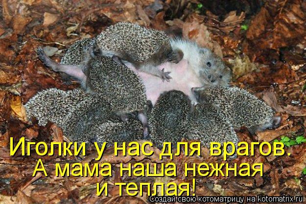 Котоматрица: Иголки у нас для врагов. А мама наша нежная и теплая!
