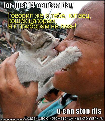 Котоматрица: -Говорил же я тебе, китаец, кошек накорми,  а к приборам не лезь!