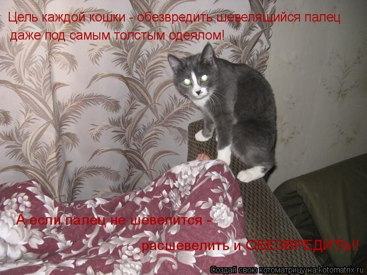 Котоматрица: Цель каждой кошки - обезвредить шевелящийся палец даже под самым толстым одеялом! А если палец не шевелится - расшевелить и ОБЕЗВРЕДИТЬ!!