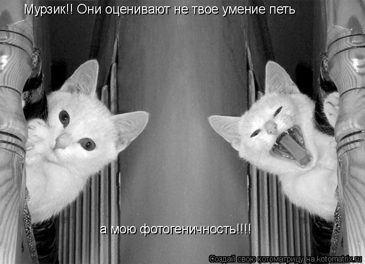 Котоматрица: Мурзик!! Они оценивают не твое умение петь а мою фотогеничность!!!!