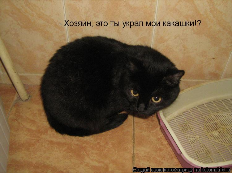 Котоматрица: - Хозяин, это ты украл мои какашки!?
