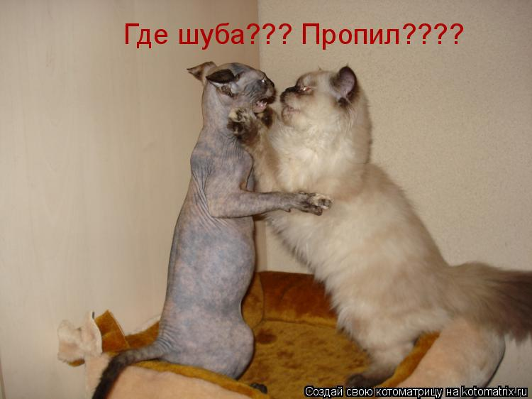 Котоматрица: Где шуба??? Пропил????