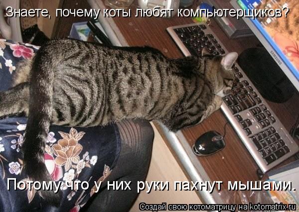 Котоматрица: Знаете, почему коты любят компьютерщиков? Потому что у них руки пахнут мышами.