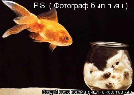 Котоматрица: P.S. ( Фотограф был пьян )