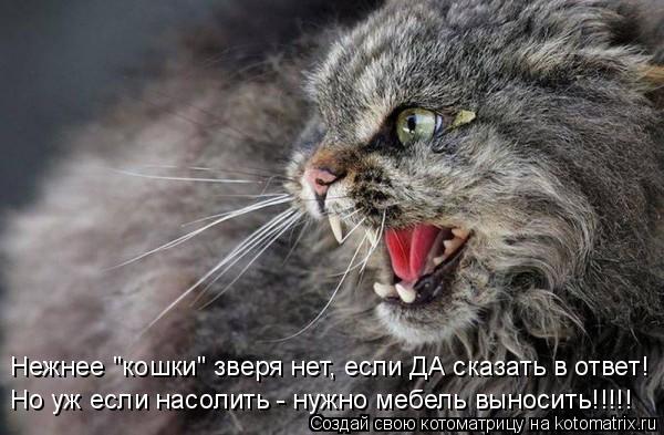 """Котоматрица: Нежнее """"кошки"""" зверя нет, если ДА сказать в ответ! Но уж если насолить - нужно мебель выносить!!!!!"""