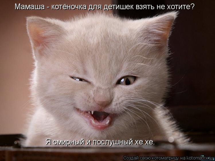 Котоматрица: Мамаша - котёночка для детишек взять не хотите? Я смирный и послушный хе хе.