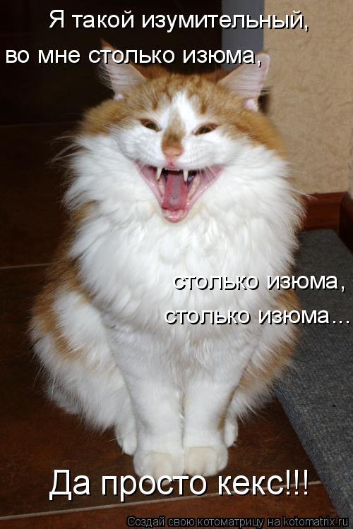 Котоматрица: Я такой изумительный,  во мне столько изюма, столько изюма, столько изюма... Да просто кекс!!!