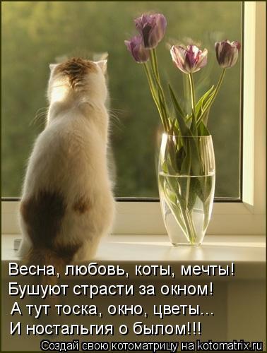 Котоматрица: Весна, любовь, коты, мечты! Бушуют страсти за окном! А тут тоска, окно, цветы... И ностальгия о былом!!!