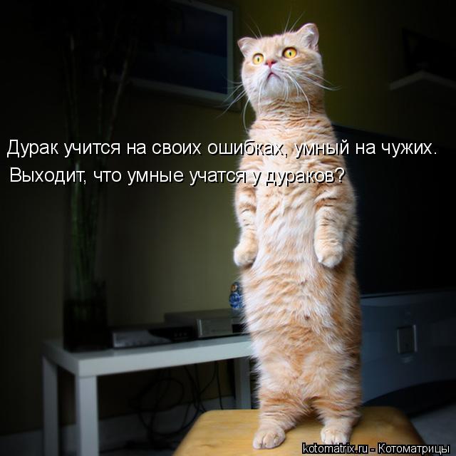 Котоматрица: Дурак учится на своих ошибках, умный на чужих.  Выходит, что умные учатся у дураков?