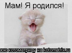 Котоматрица: Мам! Я родился!