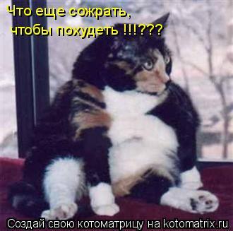 Котоматрица: Что еще сожрать, чтобы похудеть !!!???