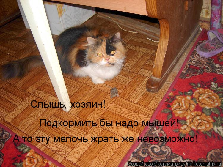 Котоматрица: Слышь, хозяин! Подкормить бы надо мышей! А то эту мелочь жрать же невозможно!